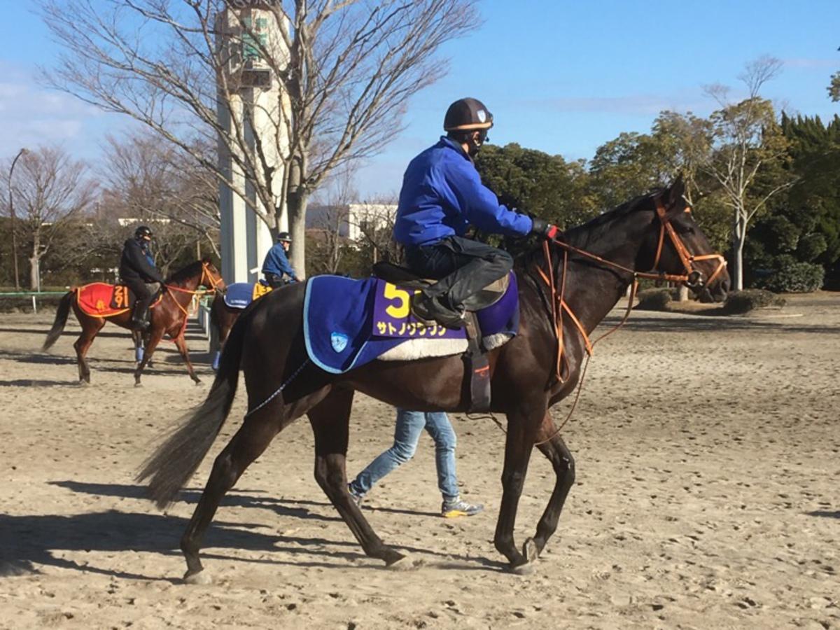 【有馬記念】ルージュバック 牡馬相手に重賞4勝、チャンス十分