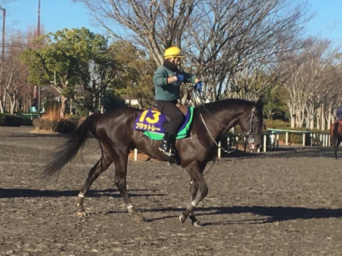 【阪神4R/2歳新馬】ヘニーヒューズ産駒、ハギノフロンティアが差し切り
