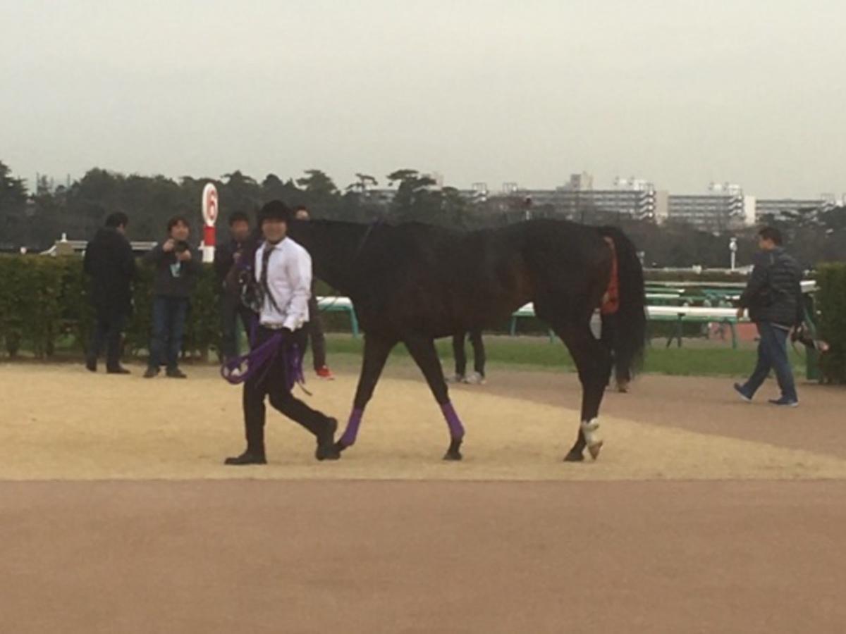 菜七子、小倉競馬で開催4日間の騎乗停止処分