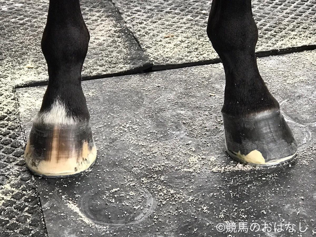 装蹄の感触が良かった馬【8/13日曜版】