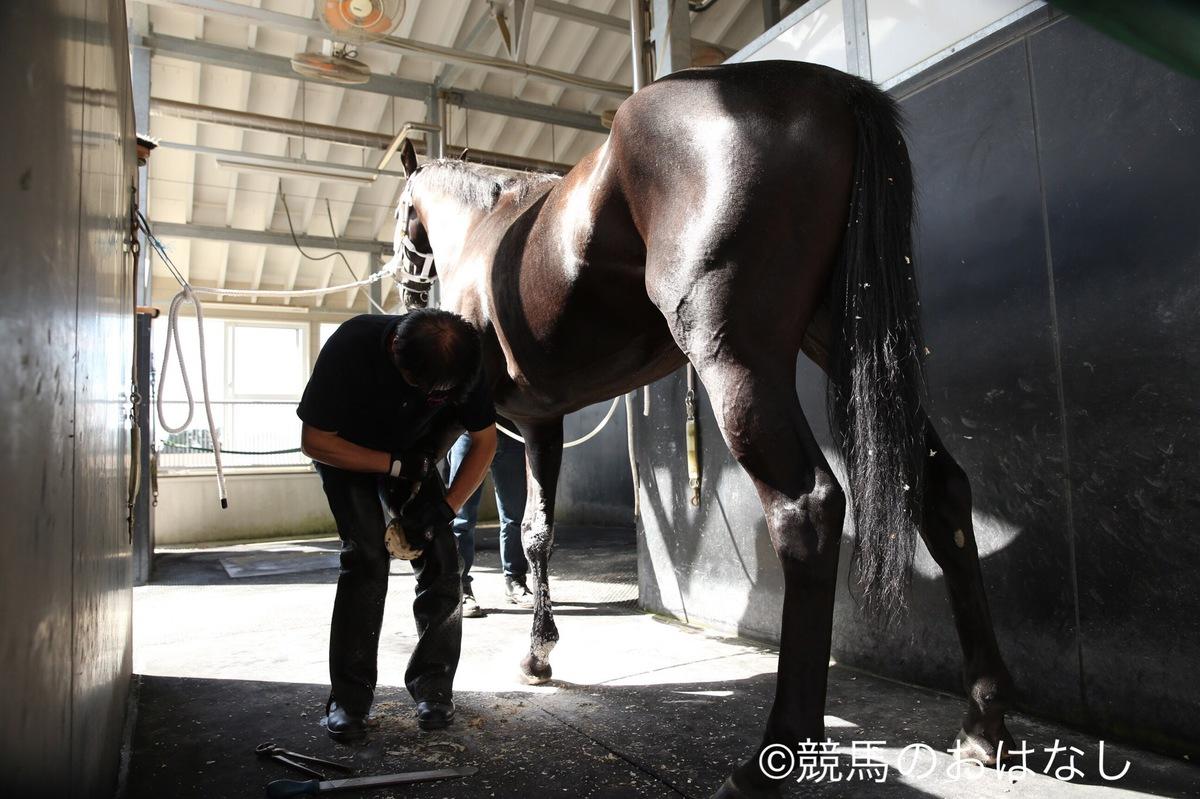 西内荘・2/11日(土)担当馬回顧