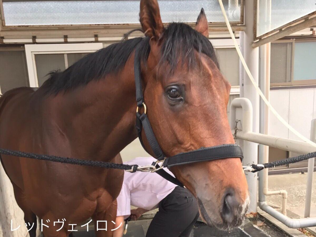 【西内荘コラム】NHKマイル、京都新聞杯に有力馬