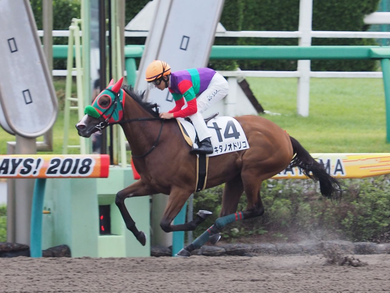 【中山1R/2歳未勝利】キタノオドリコがラスト流して完勝!圧倒的人気に応える