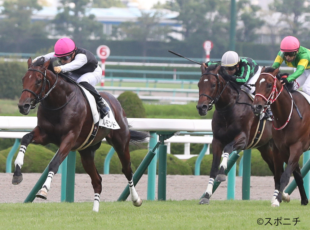 【阪神5R/2歳新馬】ディープインパクト産駒 ルモンドが人気にこたえる