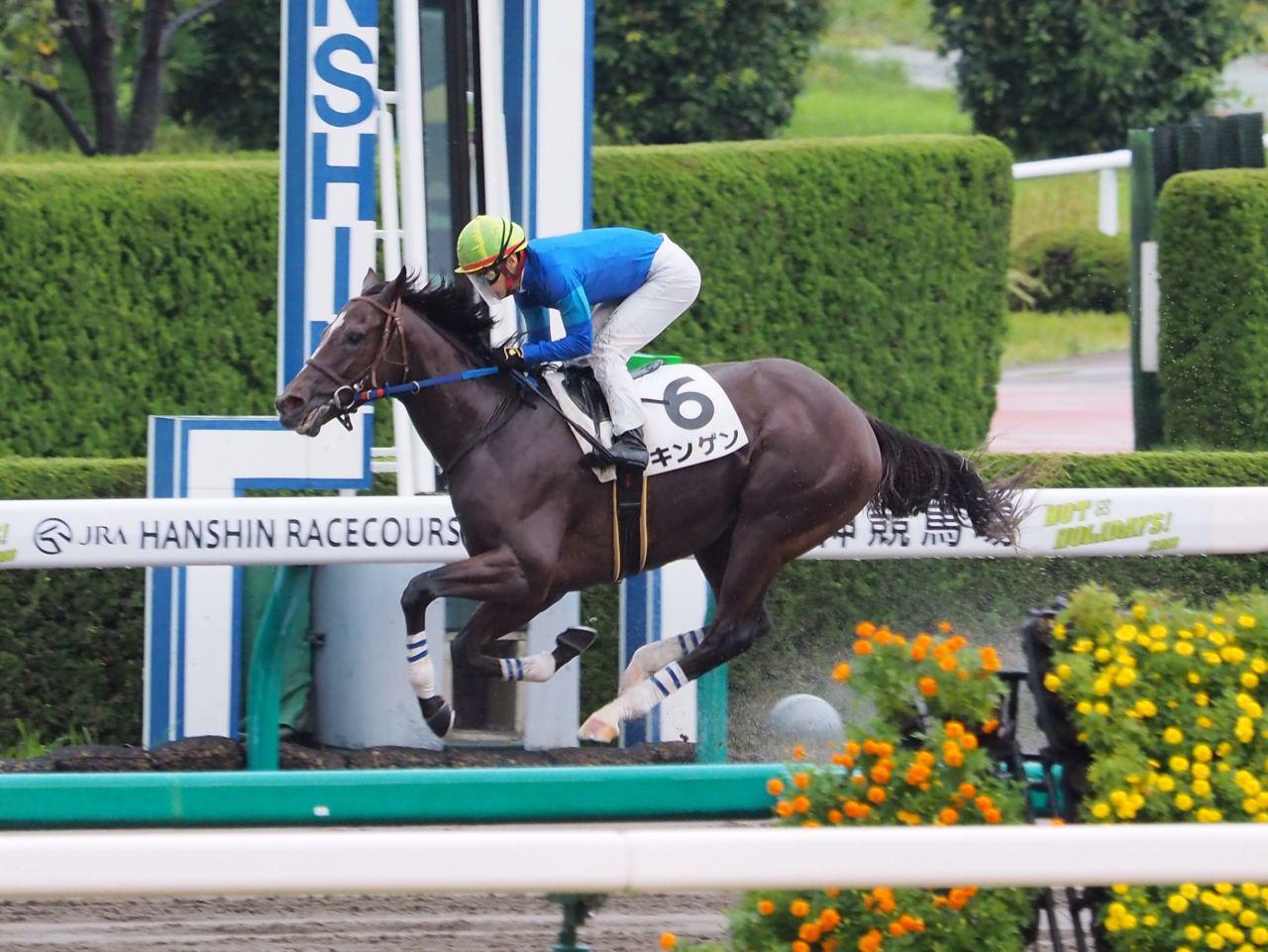 【阪神6R/2歳新馬】ゴールドアリュール産駒 キンゲンが快勝