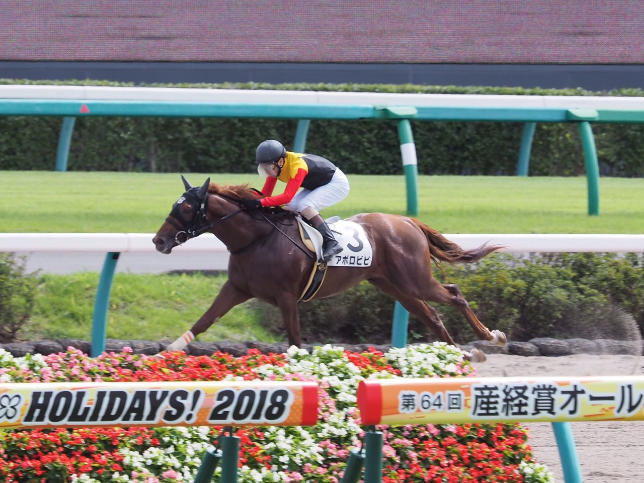 【中山4R/2歳新馬】アポロキングダム産駒 アポロビビがデビュー勝ち