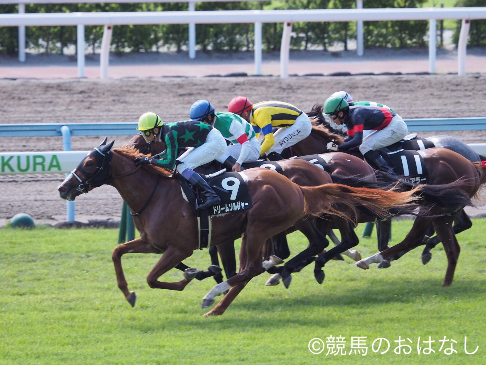 【新潟6R/2歳新馬】圧倒的人気のオルトグラフがデビューV!