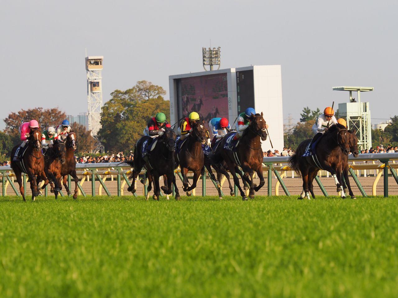 【天皇賞・秋】ダンビュライト放馬で悲鳴 競走除外