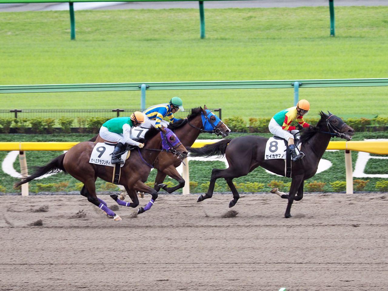 【東京2R/2歳未勝利】セイカヤマノが直線一気で差し切り