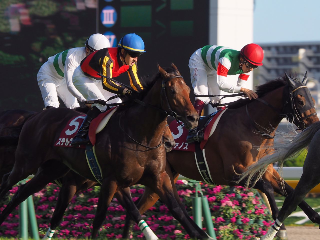 【毎日王冠】ステルヴィオ鋭く追い込むも2着!ルメール「勝った馬が強かった」