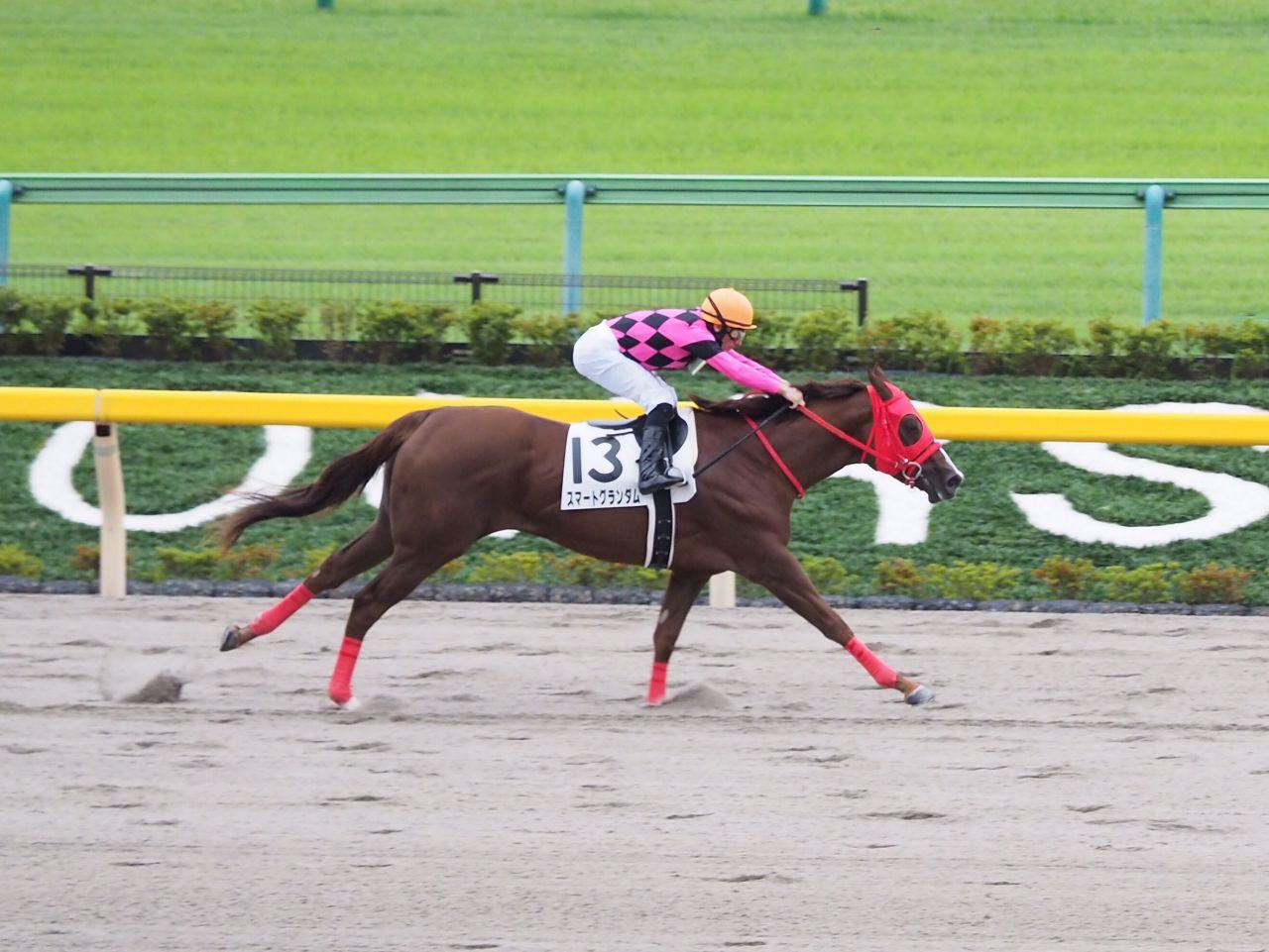 【東京4R/2歳新馬】スマートグランダムが快勝!デムーロ「すぐに良いところにつけられた」