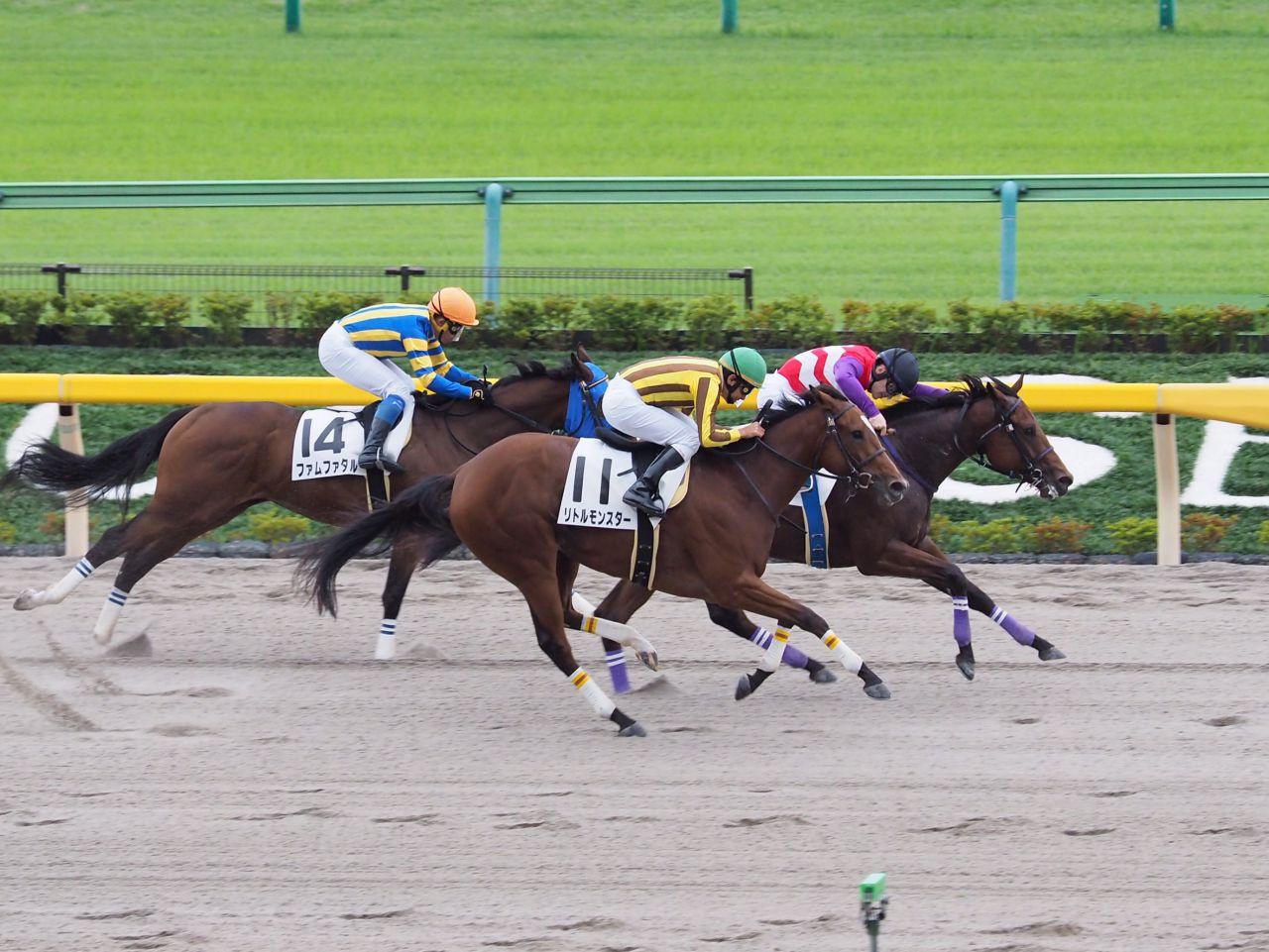 【東京2R/2歳未勝利】ハクナマタタが抜け出して人気に応える!