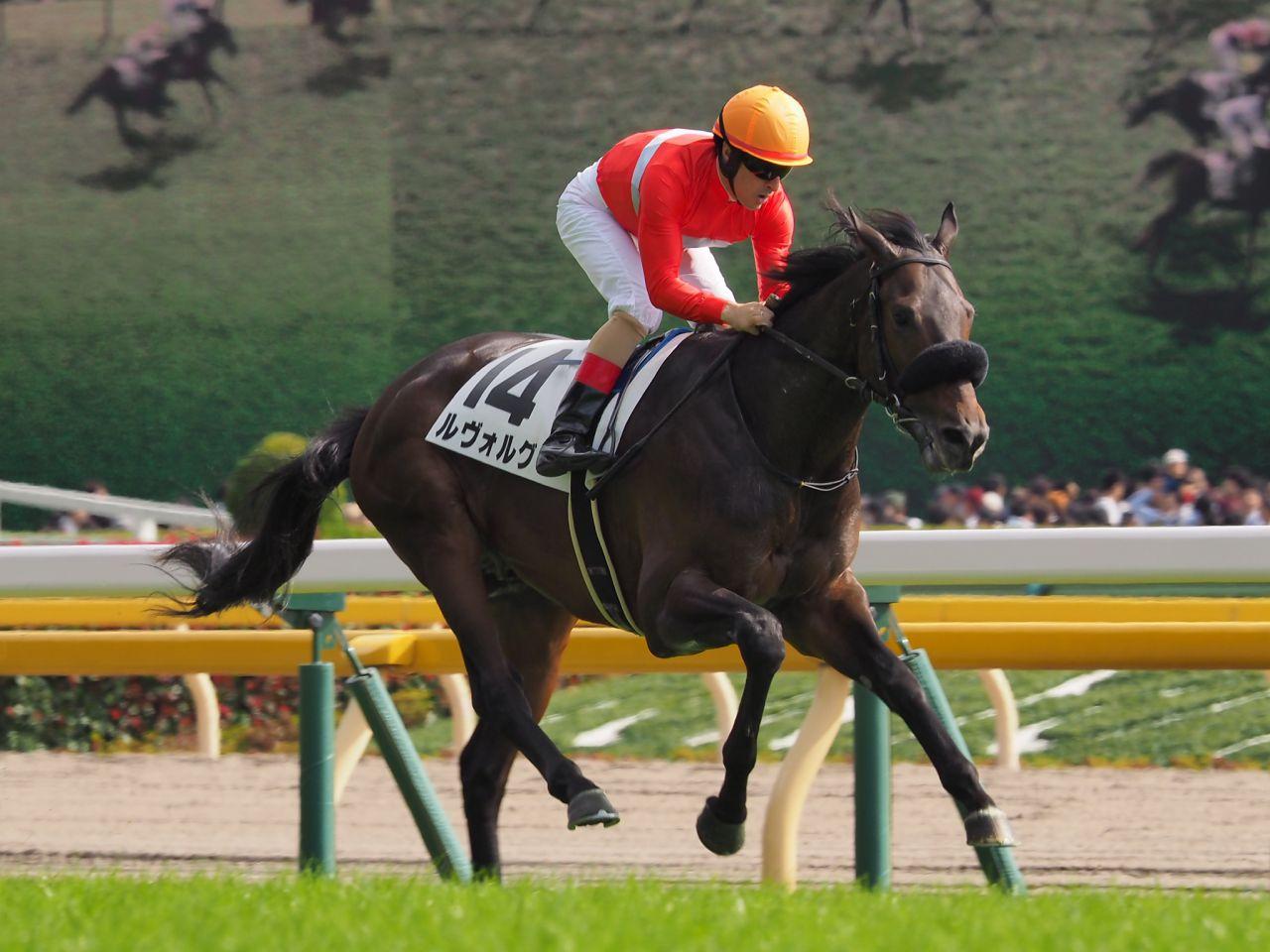 【東京5R/新馬戦】ディープインパクト産駒 ルヴォルグが完勝!