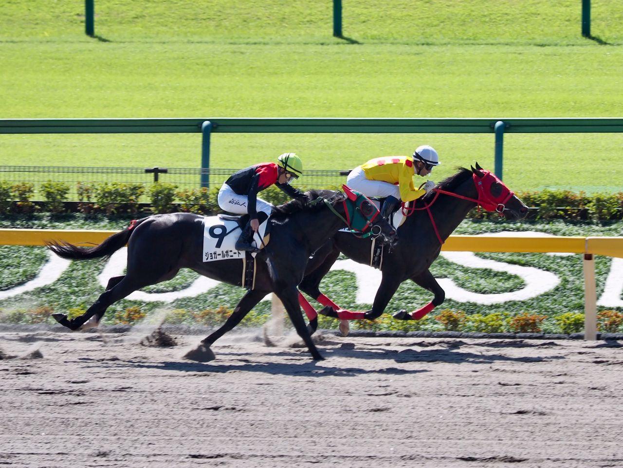 【東京1R/2歳未勝利】圧倒的人気のオリオンパッチが逃げ切る!2着馬と熾烈な追い比べ