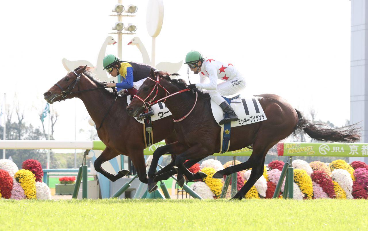 【京都2歳新馬】マカヒキ全弟 ウーリリがデビュー勝ち!