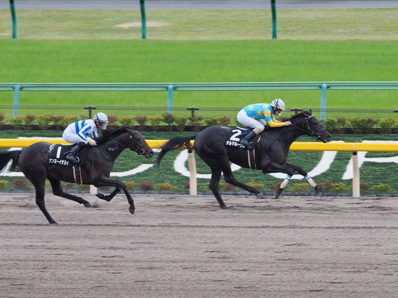 【武蔵野S】サンライズノヴァが貫禄の差し切り!重賞2勝目