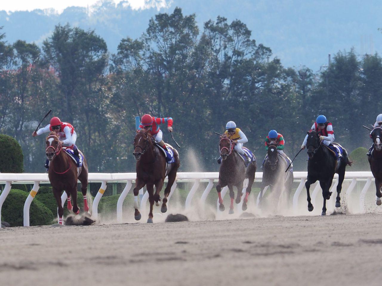 山田敬士騎手 競走距離錯誤で3ヶ月の騎乗停止が決定
