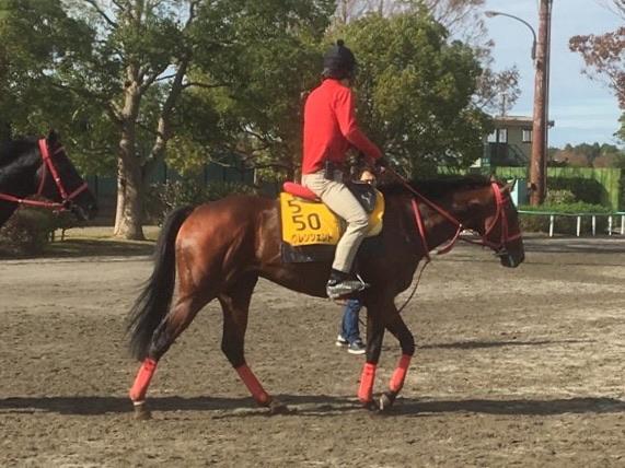 【エリザベス女王杯】ノームコア 鞍上ルメールは大きな魅力