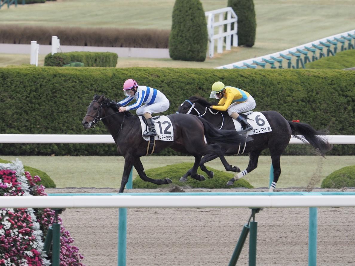 【阪神7R】ナンヨーイザヨイが2勝目!後方から差し切る