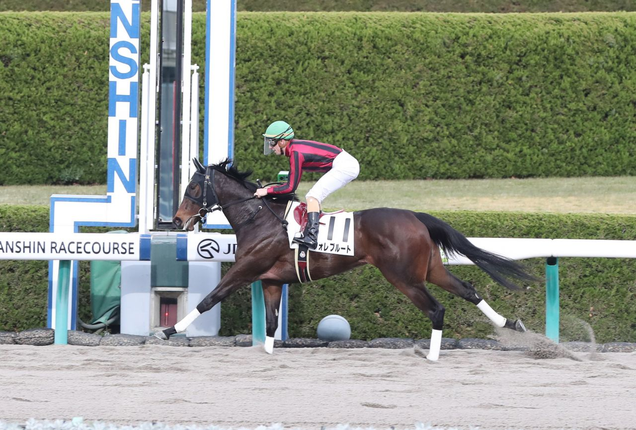 【阪神2歳新馬】ロードカナロア産駒  フォレブルートが7馬身差デビューV!