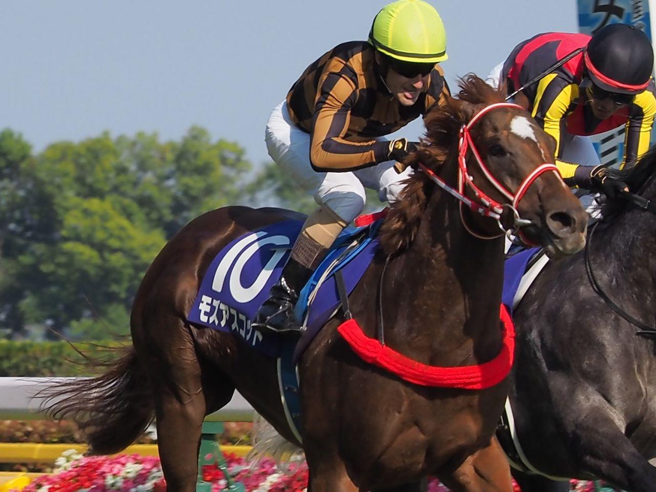 2018香港国際競走 日本馬の近況(12月6日(木))