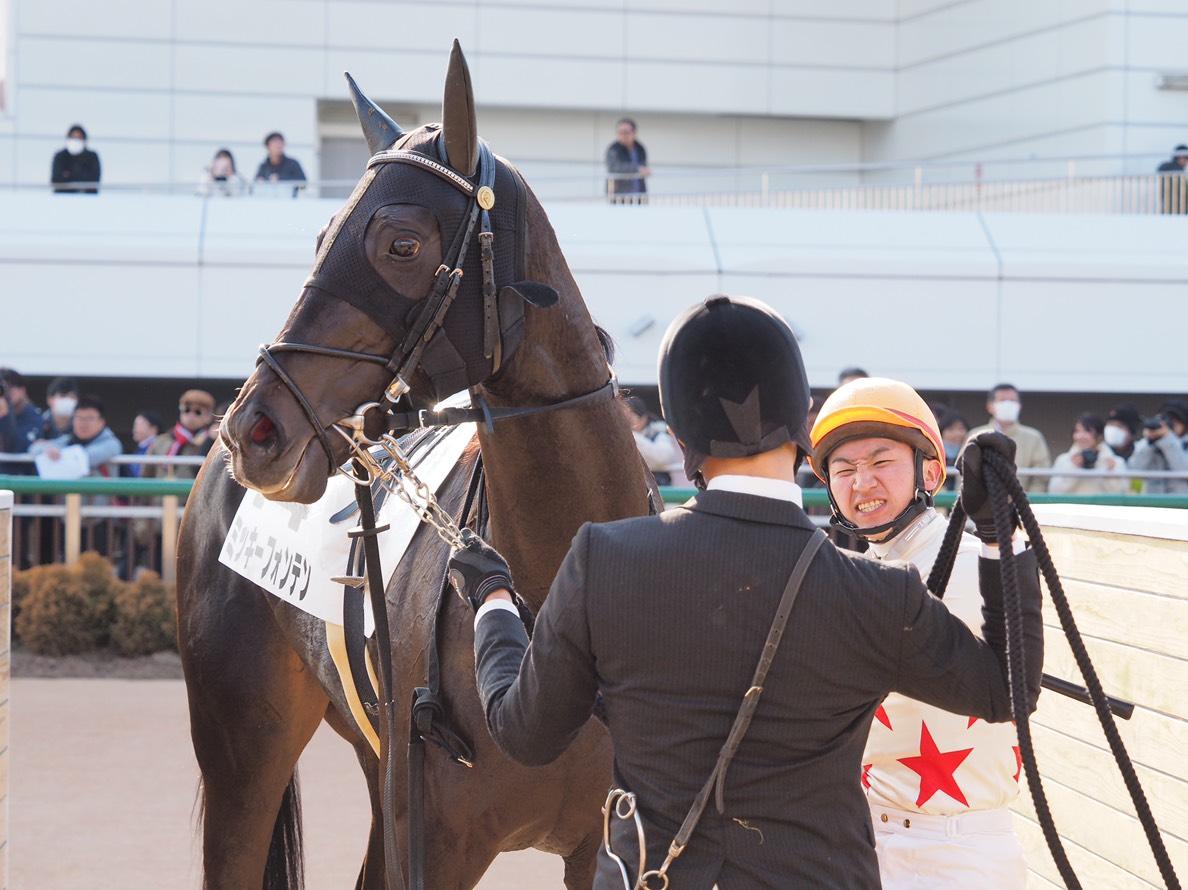 日曜中山6R新馬はディープインパクト産駒のミッキーフォンテンがデビュー勝ち