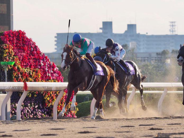 【川崎記念】JRA出走予定馬
