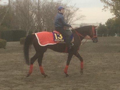 【フェブラリーS】ノンコノユメ 関東馬唯一の出走