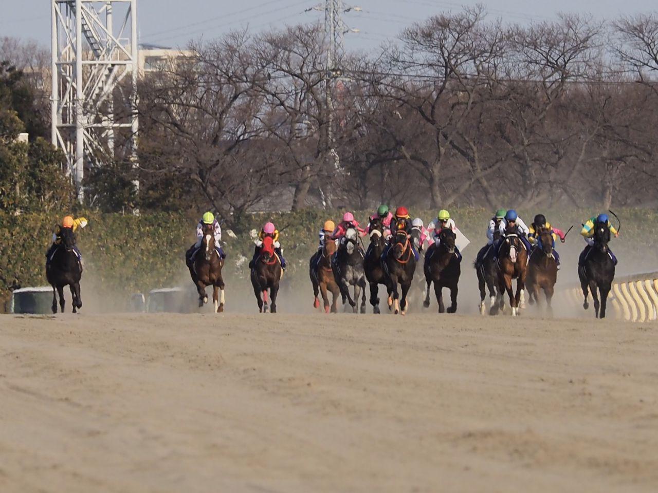 【フェブラリーS】菜七子「泣きそうにはなりました」G1初騎乗は果敢に追い込み大健闘の5着