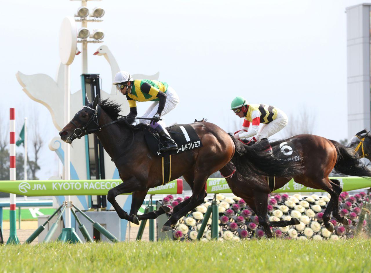 【つばき賞】良血馬ワールドプレミアが2勝目