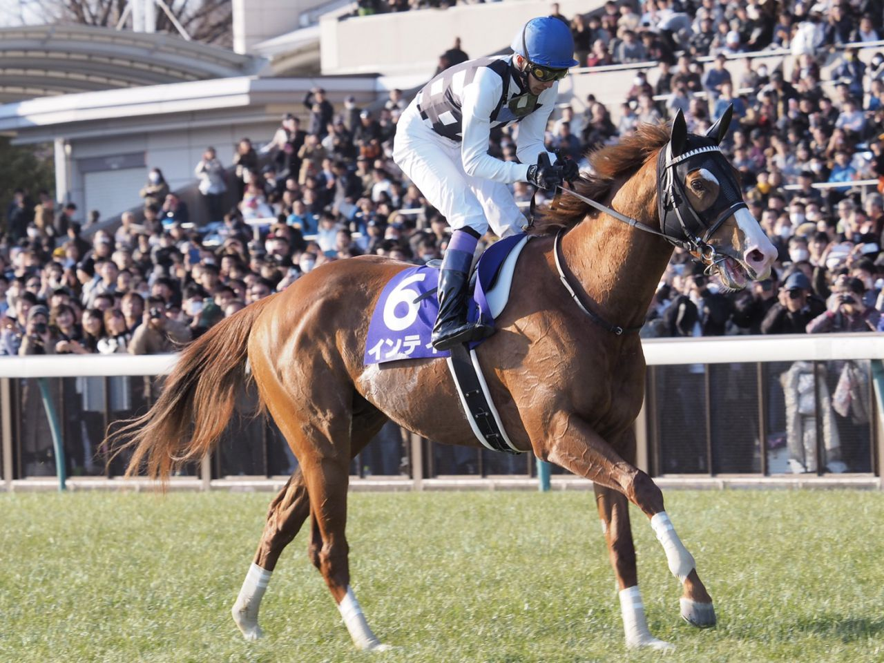 2018年度 競走馬各部門の受賞馬