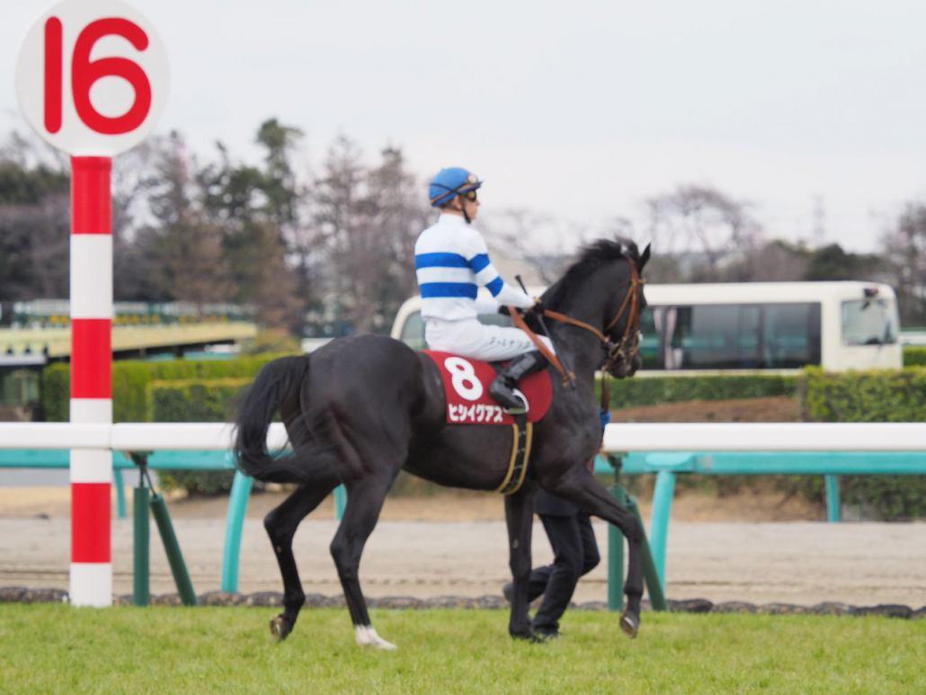 【スプリングS】武豊「やりたいレースは出来た」レース後 ジョッキーコメント