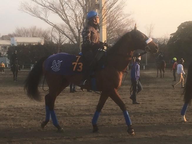 【スプリングS】ディキシーナイト  国枝師「馬が自信をもっている感じ」