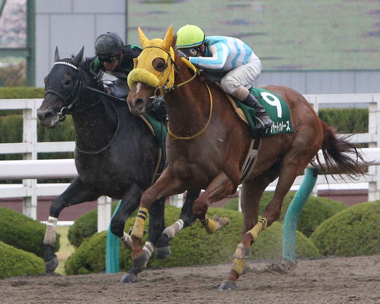 【白山大賞典】JRA出走予定馬