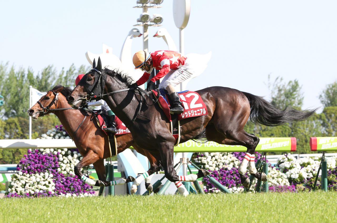 【京都新聞杯】松山「最後の1ハロンで…」レース後 ジョッキーコメント