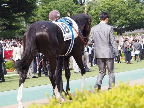 【PHOTO】日本ダービー