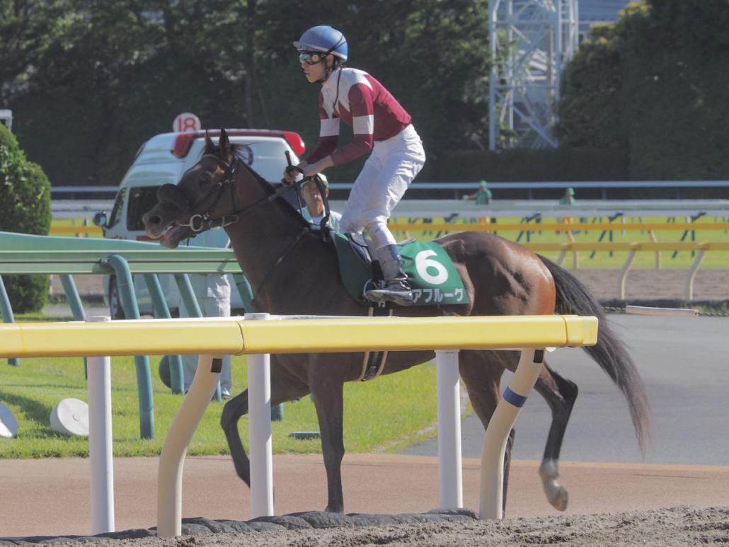 【ユニコーンS】安田隆師「首の上げ下げの差」レース後 関係者コメント