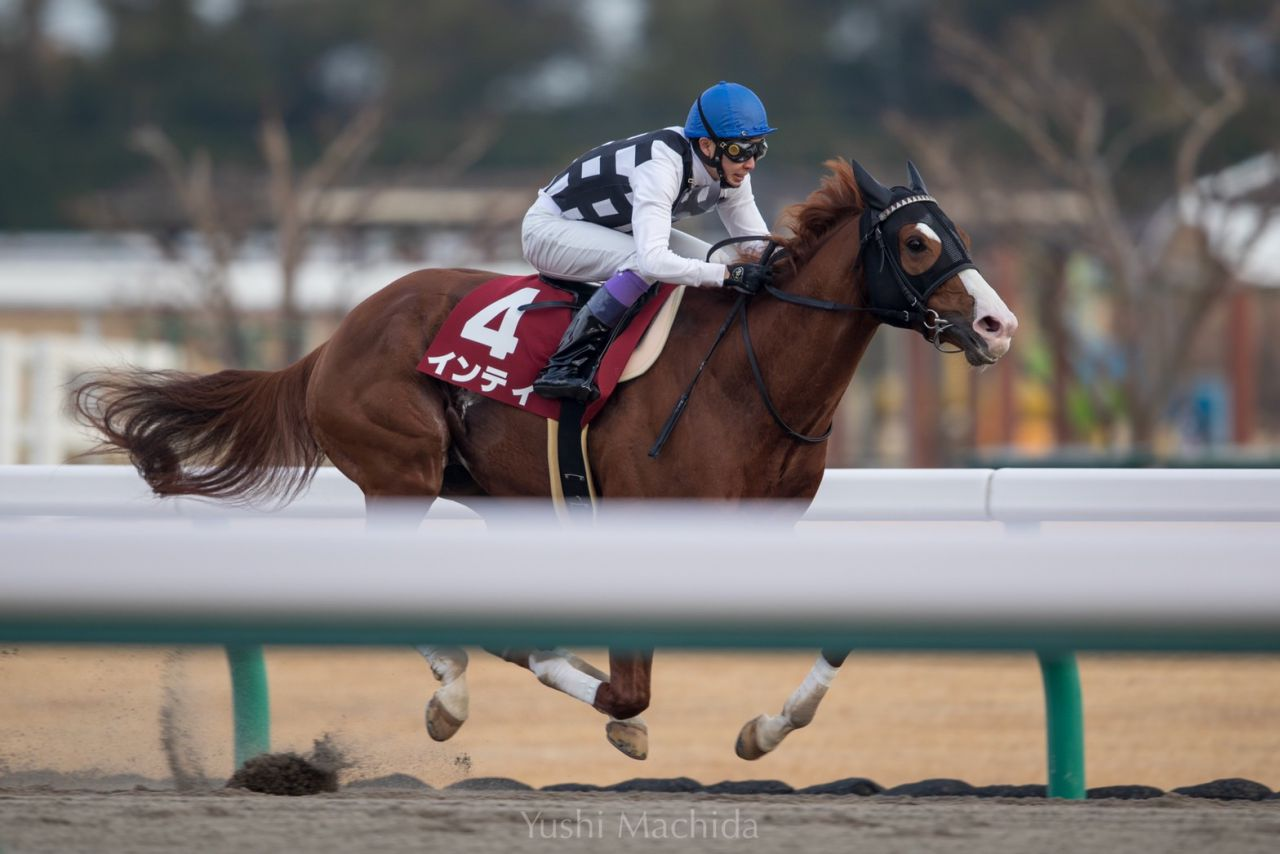 【ジャパンダートダービー】選定馬について