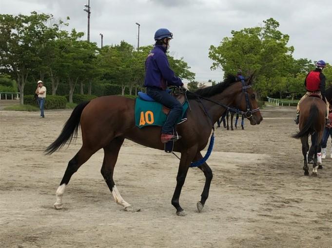 【注目新馬】ワーケア  セレクトセール1億2000万越えの期待馬登場