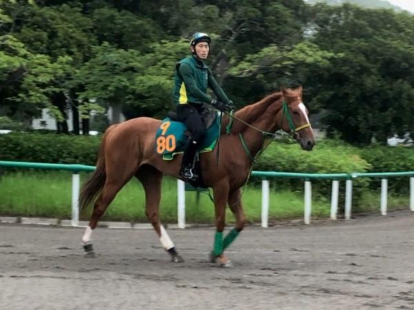 【注目新馬】コパノカリブ 背中の感じ良好で期待大きい