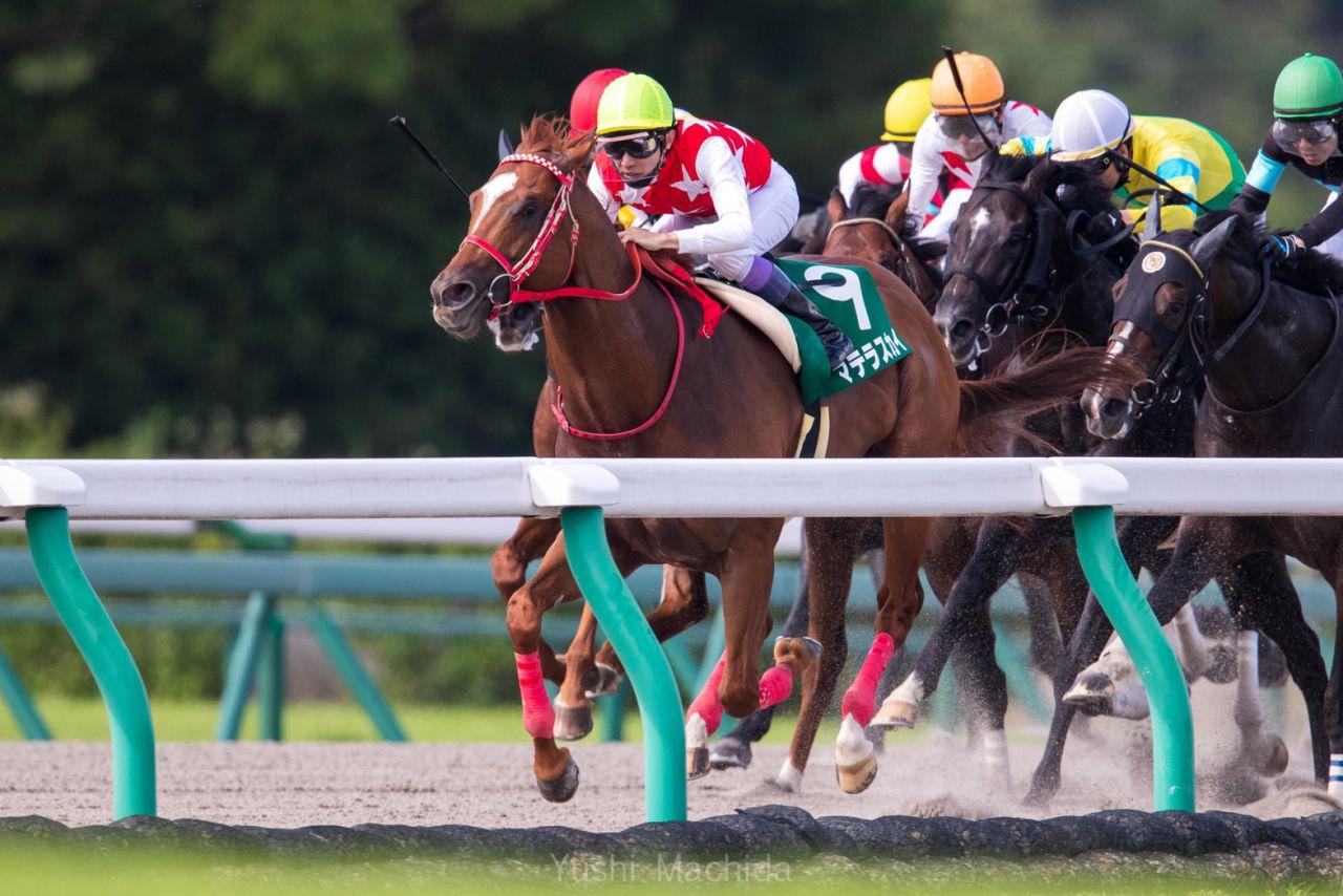 【プロキオンS】田辺「馬自身も成長した」アルクトスが重賞初制覇!