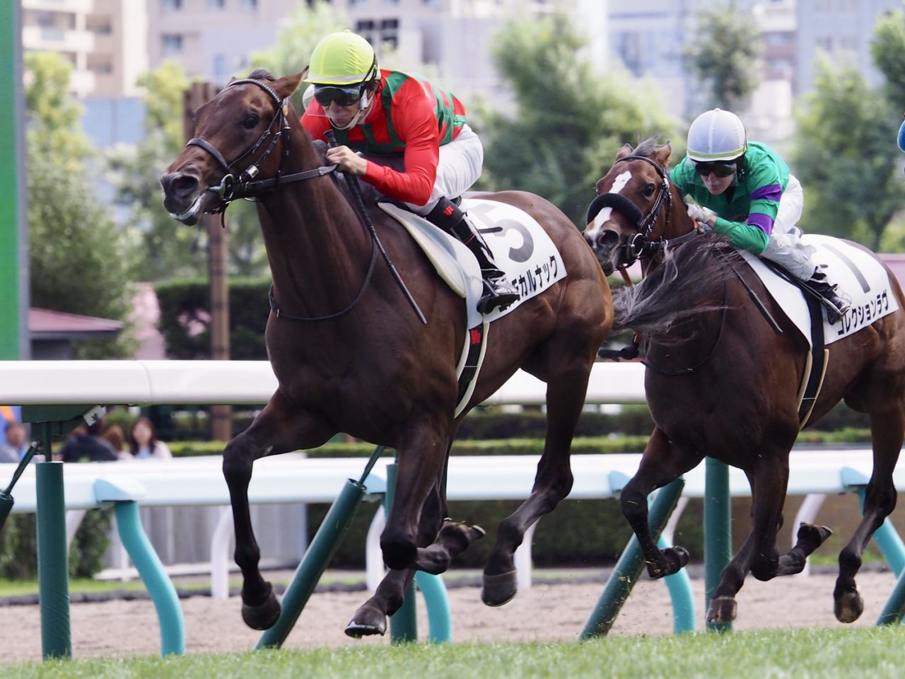 【新馬/札幌5R】キングヘイロー産駒 コスモカルナックがデビューV!