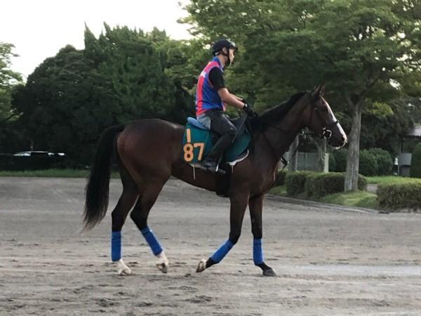 【注目新馬】ステージアクトレス 戸田師「稽古では文句ない動き」