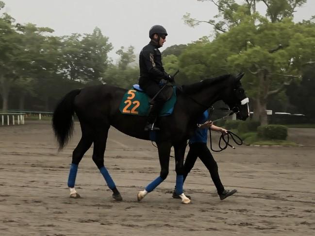 【小倉2R】ディープインパクト産駒 ブルーミングスカイ7馬身差圧勝!父の死後産駒初勝利