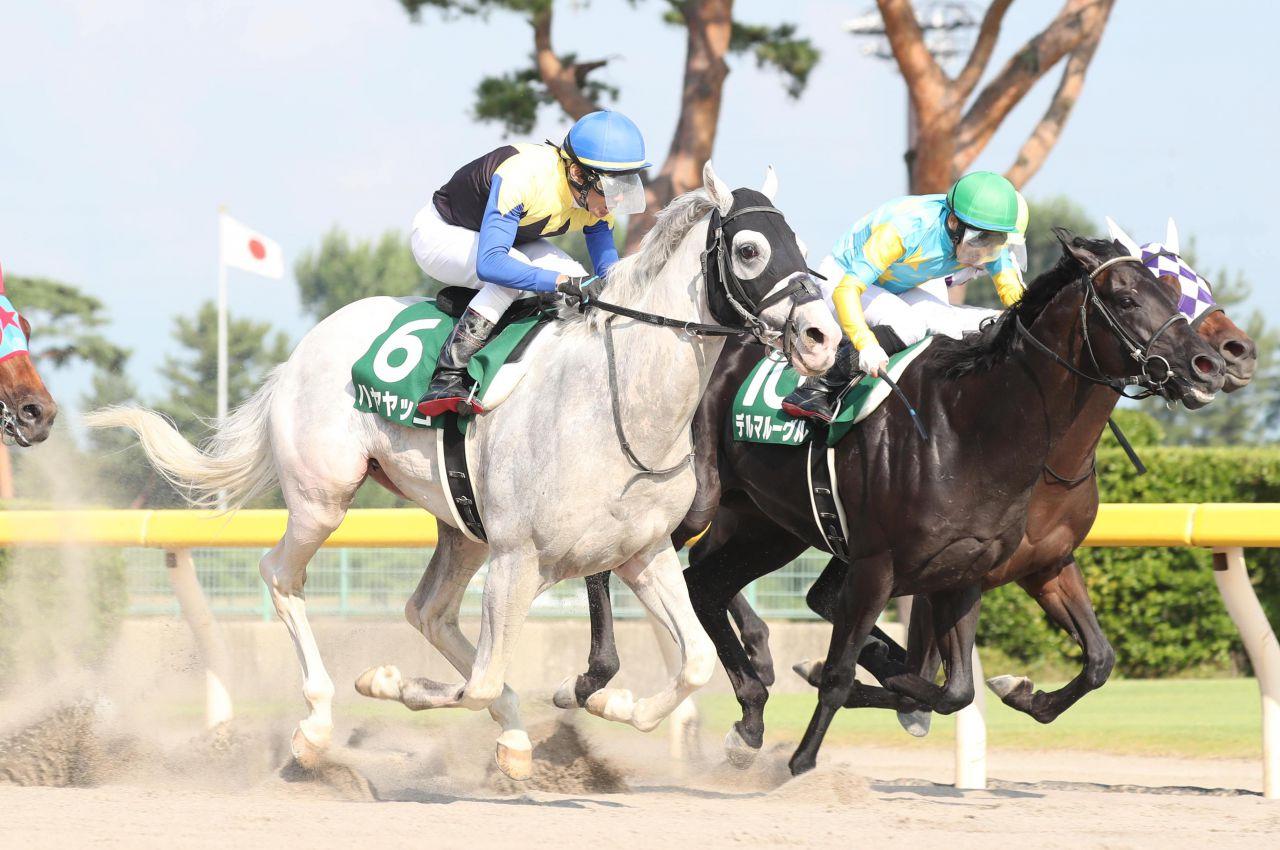 【レパードS】白毛のハヤヤッコが豪快な差し切り!重賞初制覇