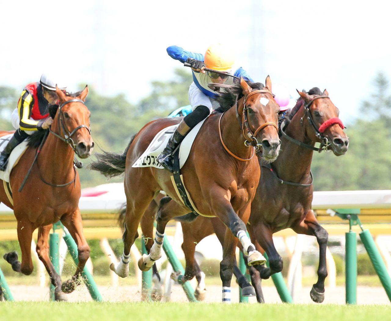 【新馬/新潟5R】ロードエクスプレスが3馬身半突き放してデビュー勝ち