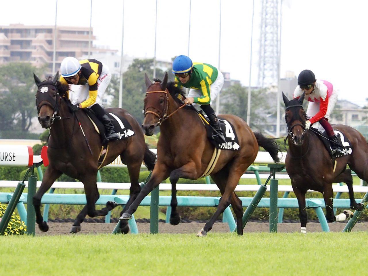 【セントライト記念】リオンリオンが先行抜け出しで快勝!横山典騎手が勝利に導く