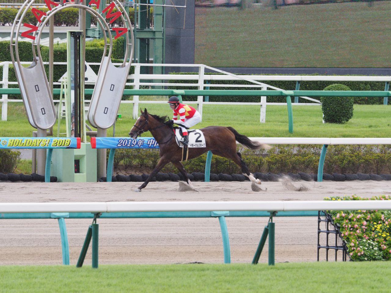 【新馬/阪神3R】ゴールドアリュール産駒 アルコレーヌが5馬身差の圧勝!