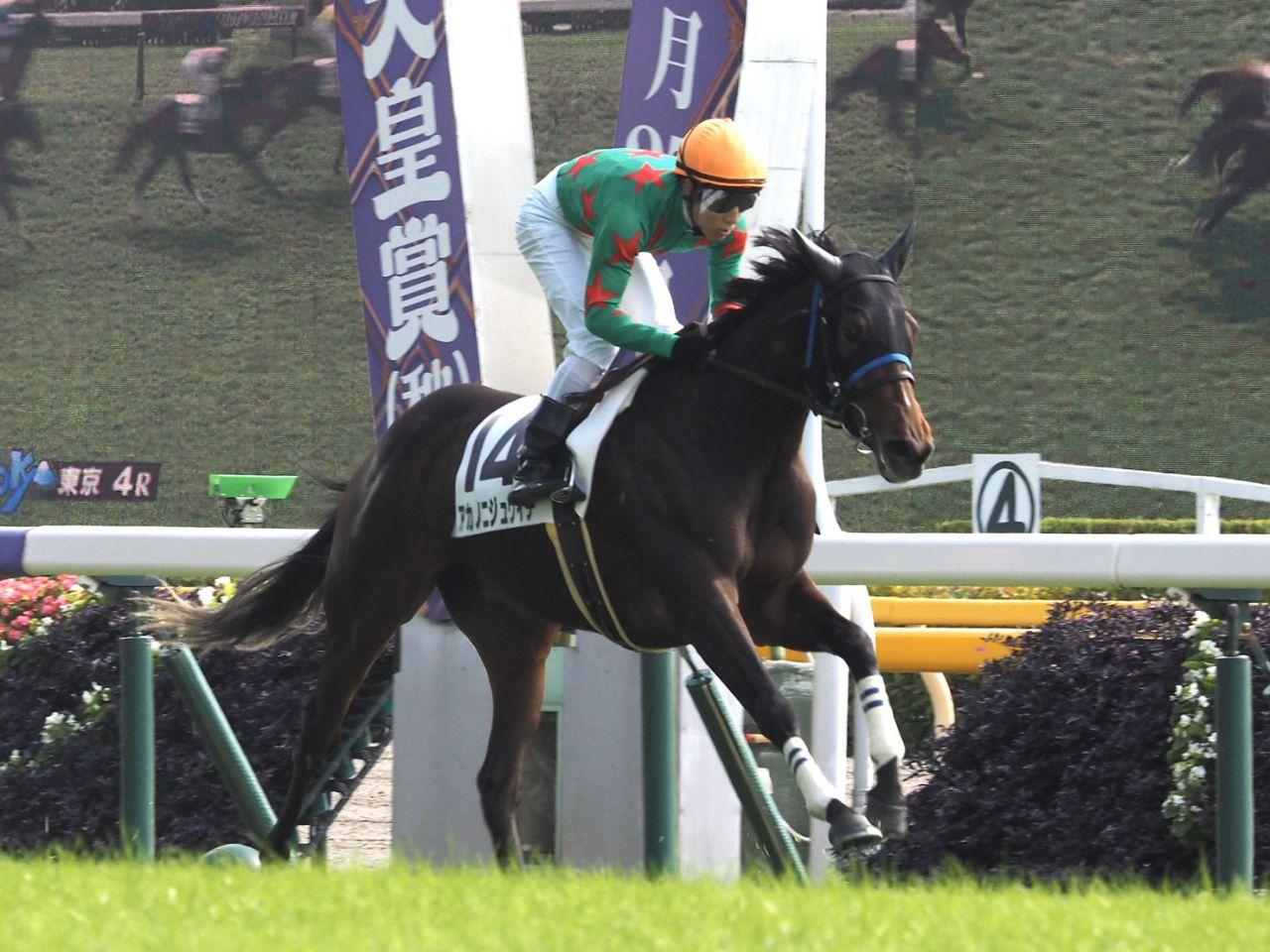 【新馬/東京5R】トウケイタンホイザがデビューV!良血馬が集まった1戦を制する