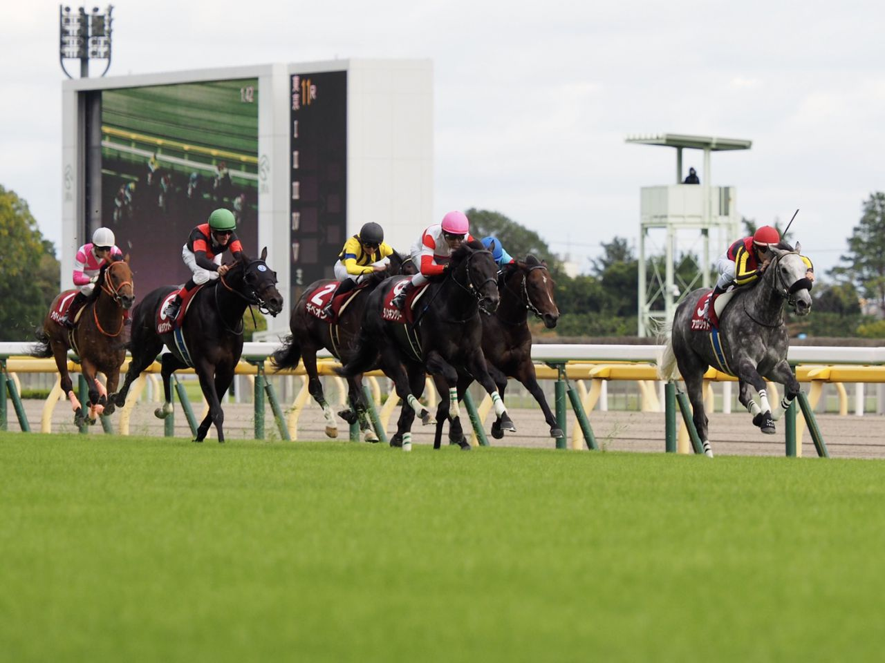 【京都大賞典】Mデムーロ「内から寄られて…」レース後関係者コメント